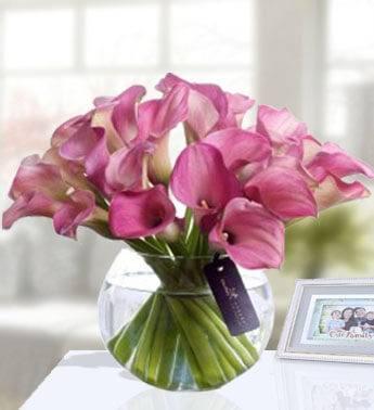 Grandeur of the Calla Lily 20